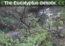 The Eucalyptus Debate